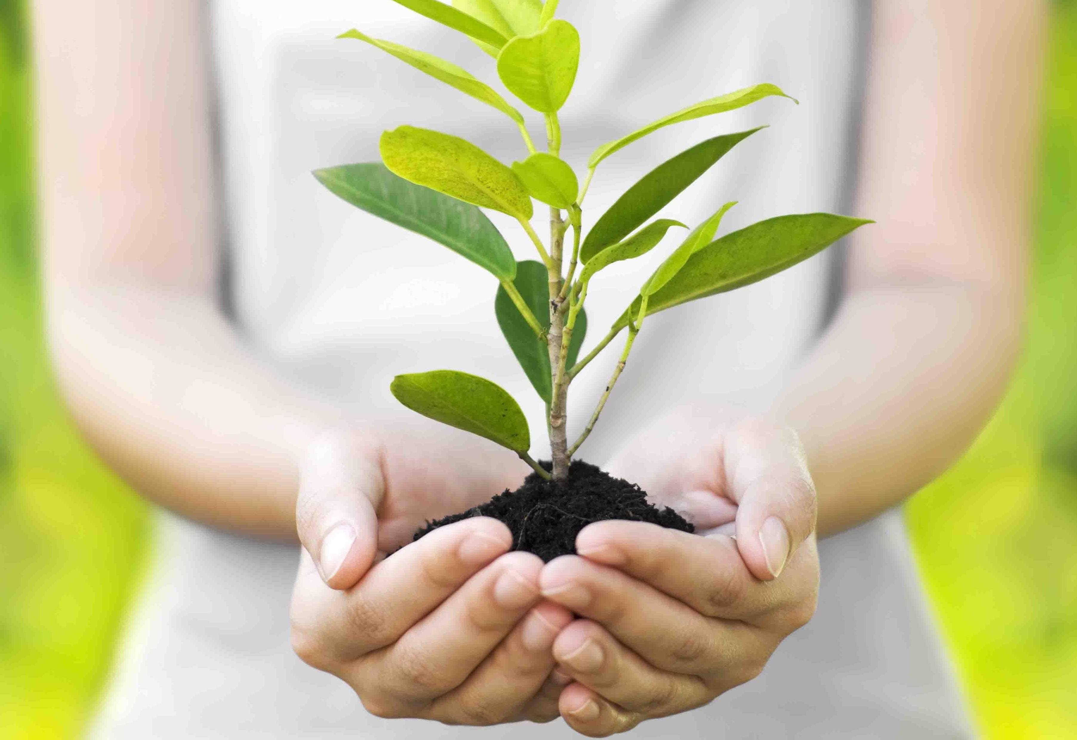 плодовое дерево, вырастить дерево